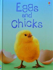 Eggs and Chicks - Fiona Patchett
